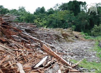 Scrap wood at a lumber mill